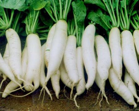 Củ cải trắng chữa viêm gan vàng da