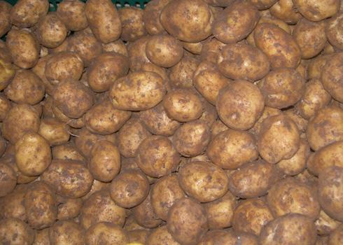 Phân biệt khoai tây Trung Quốc và khoai tây Đà Lạt