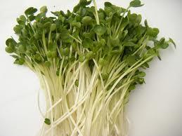 Lợi ích dinh dưỡng của rau mầm