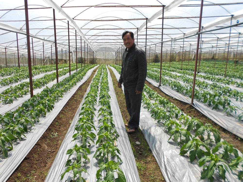 Để đạt 12.500 ha rau an toàn vào năm 2020